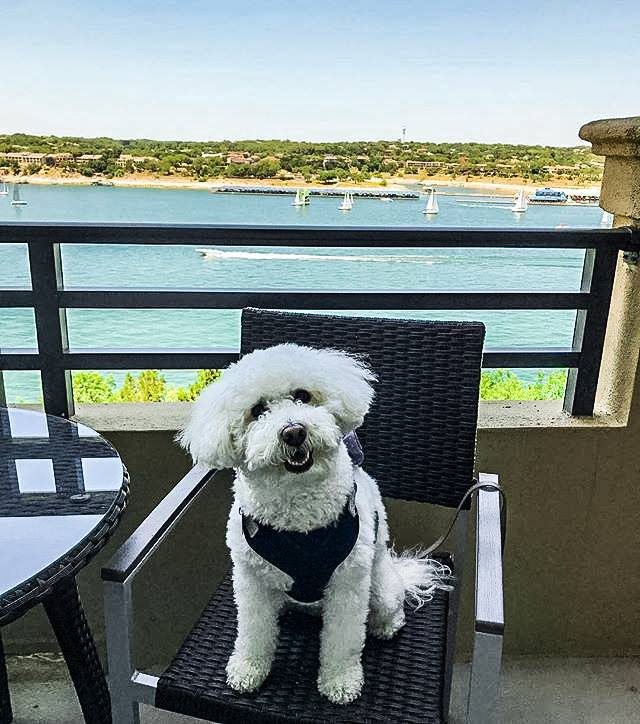 Lakeway Resort & Spa Dog Friendly