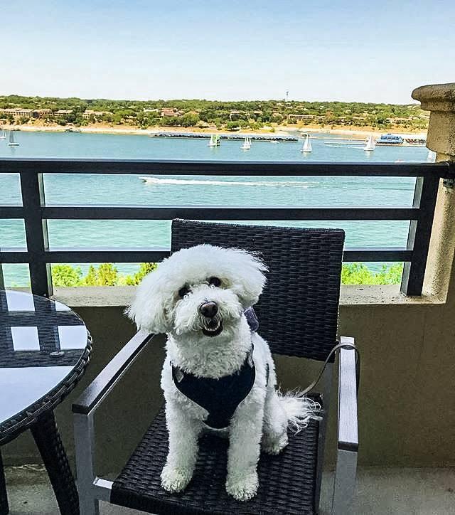 Lakeway Resort & Spa Dog Friendly