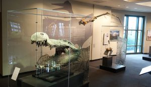 Bullock Museum Gator