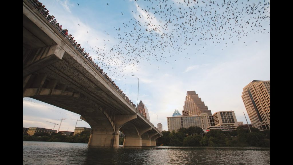 Congress Bridge Bat Swarm