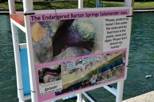 Barton Springs Salamander Sign