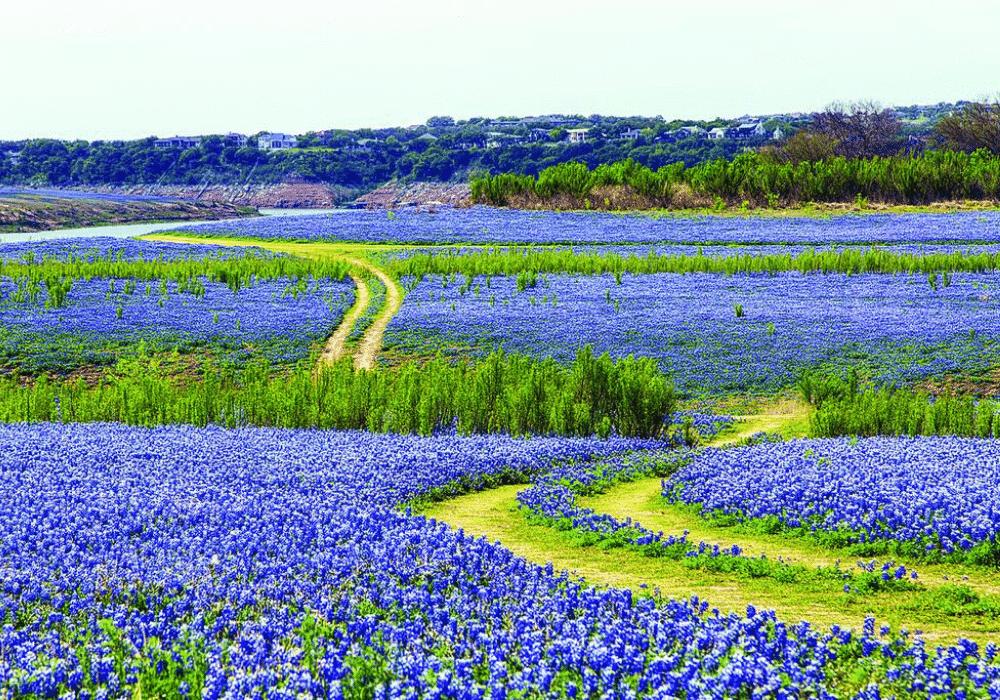 Muleshoe Bend recreation Area