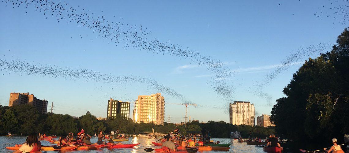 live-love-paddle-bats